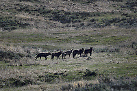 5 Wolves in Yellowstone