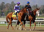Ontology with Mario Gutierrez aboard in the post parade for the Grade III Sham Stakes at Santa Anita Park in Arcadia, California on January 11,2014. (Zoe Metz/ Eclipse Sportswire)