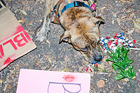 A dog lays near protest signs near the free-food distribution area in FDR Park outside of the secure area surrounding the Democratic National Convention at the Wells Fargo Center in Philadelphia, Pennsylvania, on Wed., July 27, 2016.