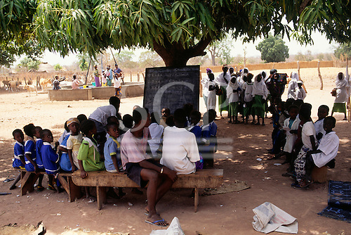 The Gambia. Schoolchildren attending class outside with the blackboard set up under a mango tree with cows and the village well.