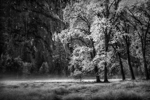 Yosemite, Fall Trees, Gary Wagner Photography