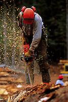 A logger uses a chainsaw to cut up a freshly cut tree. Alaska.