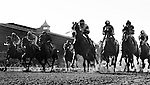 The field for the Front Runner Stakes races by the grandstand for the first time at Santa Anita Park, Arcadia California on September 29, 2012.