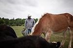 May 22, 2010. Baskerville, Virginia.. John Boyd, Jr. feeds the cattle, and mule, named 40 Acres,  on his farm that has been in the family for over 100 years. . Dr. John Boyd, Jr., a Virginia farmer, has lobbied the White House and Congress for the better part of two decades on behalf of black farmers. .A $1.25 billion settlement he helped to negotiate in February for the federal government to compensate black farmers has become ensnared in Washington. .Meanwhile, many elderly farmers who stand to benefit are dying before they can seek restitution..Their case, known as the black farmers settlement, and commonly referred to as Pigford II, is the second phase of a federal lawsuit settled in 1999. It covers more than 80,000 farmers who claim they were denied critical aid comparable to what white farmers received from the Department of Agriculture between 1981 and 1996 because of the color of their skin..Congress reopened the case in 2008, and set aside $100 million to address the late claims. President Barack Obama, who co-sponsored the 2008 measure when he was in the Senate, created a $1.15 billion line item in his budget for the 2010 fiscal year to cover the new class of litigants..The money was less than half of the $2.5 billion the farmers had fought for, but the administration's promise of a quick resolution prompted them to accept the deal.  .