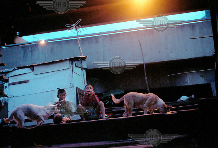 Children play with two dogs in the slum community built beside the railway tracks and Expressway in Bangkok. The majority of people living here are economic migrants who have left the countryside in search of higher paid work.
