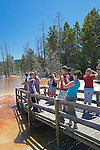 Canary Spring, Mammoth Hot Springs Terraces, named for the brilliant yellows left behind by sulpher dependent filamentous bacteria.  Yellowstone National Park.  Yellowstone National Park, the first National Park in the world, still enthrals over three million visitors a year with it's geothermal features,wildlife,  rugged mountains, deep canyons and stunning ecosystem.