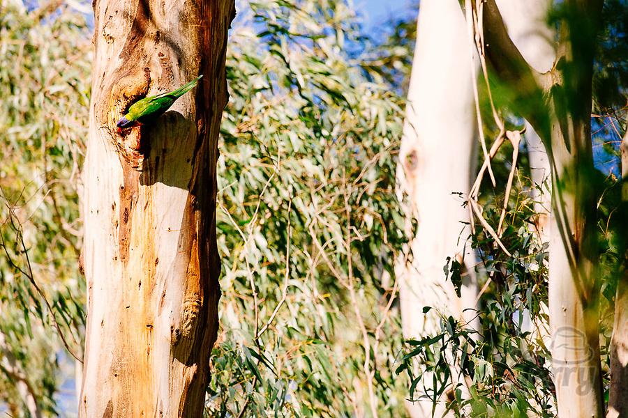 Image Ref: YV492<br /> Location: Normans Reserve, Warrandyte<br /> Date of Shot: 17.10.20