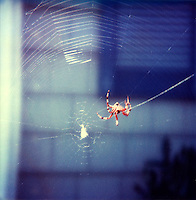 Spider in its web<br />