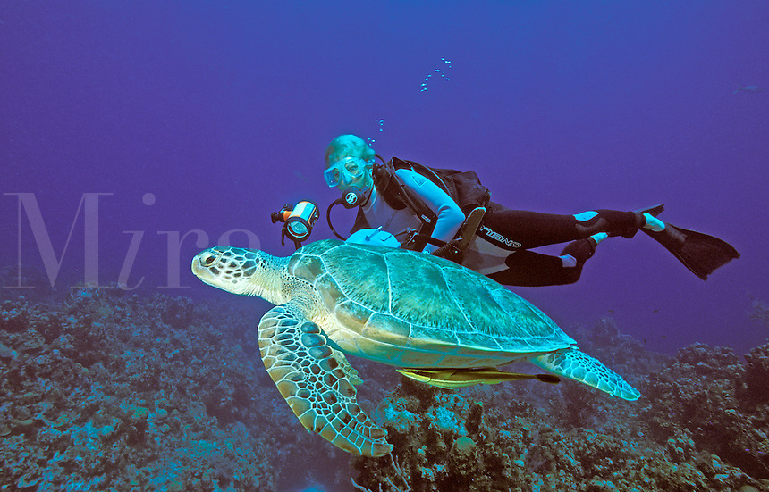 Green Sea Turtle (Chelonia mydas) and diver (MR) at Bloody Bay Wall, Little Cayman, Cayman Islands.