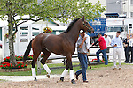 May 15, 2014: Black-Eyed Susan contender America, trained by Bill Mott, arrives Thursday morning at Pimlico Race Course in Baltimore, MD. Joan Fairman Kanes/ESW/CSM