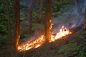 02/07/18<br /> <br /> A new woodland fire  has broken out less than a mile from Alton Towers at Dimmings Dale in Staffordshire.<br />  <br /> All Rights Reserved F Stop Press Ltd. +44 (0)1335 344240 +44 (0)7765 242650  www.fstoppress.com