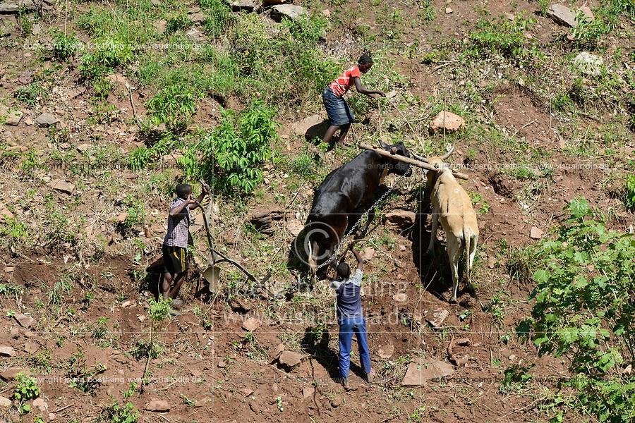 ZAMBIA, Sinazongwe, Tonga tribe, village Muziyo, contour farming in mountain range / Kleinbauern bestellen ihre Felder, Kontur Anbau