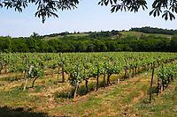 A view over the vineyard Chateau de Haux Premieres Cotes de Bordeaux Entre-deux-Mers Bordeaux Gironde Aquitaine France