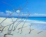 Barbuda, West Indies<br /> Driftwood and white sand of Palm Beach - Caribbean Leeward Islands
