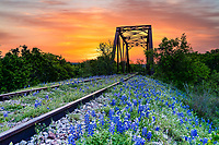 Bluebonnet Railroad Tracks Sunrise - We have come to this old abandoned rail road track in the past years, but this year instead of catching a sunset we decided to try for a sunrise and we got lucky.  Today we had a great sunrise over this railroad tressel right before the sunrise pop over the horizon with some fantastic colors.  I managed to get a few shot before some heavyier clouds moved in the predawn but cleared  a bit for a sunrise shot later on.  Any case the pre dawn sunrise over these bluebonnets were a great catch in the Texas hill country.