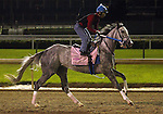 LOUISVILLE, KY - MAY 02:  Royal Obsession (Tapit x Rote, by Tiznow) worked 4 furlongs in :50.40 with exercise rider Carlos Rosas at Churchill Downs, Louisville KY, in preparation for the Kentucky Oaks. Owner Stonestreet Stables LLC, trainer Steven M. Asmussen. (Photo by Mary M. Meek/Eclipse Sportswire/Getty Images)