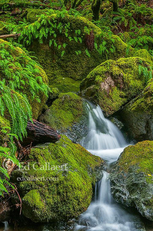 Lower Falls, Cataract Creek, Mount Tamalpais, Marin County,