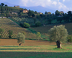 Tuscany, Italy<br /> Rolling forested hills and vineyards of the Val D'Orcia with scattered olive and cypress trees near the hill town of Castelnuovo dell'Abate