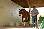 HALLANDALE BEACH, FL-JANUARY 28: Gun Runner at the barn before departure at Gulfstream Park Race Track on January 28, 2018 in Hallandale Beach, Florida. (Photo by Kaz Ishida/Eclipse Sportswire/Getty Images)