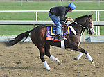 Next Question, trained by Michael Trombetta,exercises in preparation for the upcoming Breeders Cup at Santa Anita Park on November 1, 2012.
