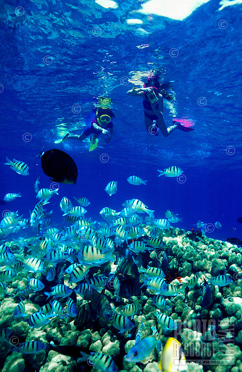 Snorkelers enjoy the diversity of colorful marine life in the inviting waters of Hanauma Bay, Oahu.