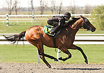 07 April 2011.  Hip #105 Any Given Saturday - Blue Lagoon filly, consigned by Wavertree Stables.