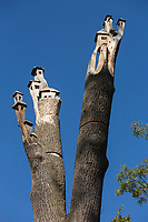 Europe, France, 75012, Paris: Sculptures du bois de Vincennes: Photo de l'arbre avec la chouette et les petites maisons pour les oiseaux à son sommet sur la route Aimable,//  <br /> Europe, France, 75012, Paris: Sculptures of the Bois de Vincennes: Photo of the tree with the owl and the little houses for the birds at its summit on the Aimable road,