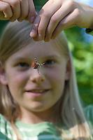 """Vierfleck-Kreuzspinne, Vierfleckkreuzspinne, Mädchen, Kind mit Spinne in der Hand, lässt Spinne an deren Faden hängen und beobachtet sie, """"Keine Angst vor Spinnen!"""", Weibchen, Kreuzspinne, Araneus quadratus, fourspotted orbweaver, Araneidae, Radnetzspinnen, Kreuzspinnen, orbweavers, orb-weaving spiders"""