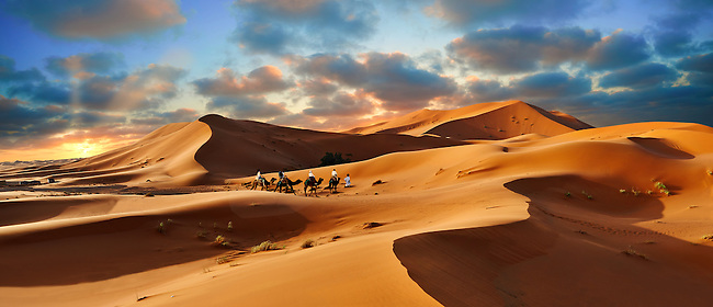 Camel rides on the Sahara sand dunes of erg Chebbi at sunset, Morocco, Africa