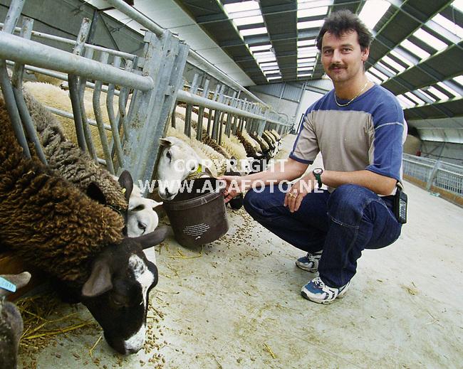 Aalst . 070700  Foto : Koos Groenewold / APA Foto<br />Dhr van Driel voedt  de schapen