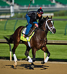 April 28, 2015: Materiality, trained by Todd Pletcher, exercises in preparation for the 141st Kentucky Derby at Churchill Downs in Louisville, Kentucky. Scott Serio/CSM