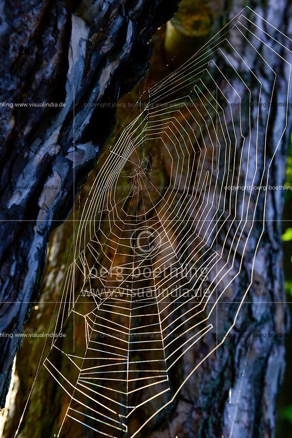 GERMANY, Plau, forest, spider net / DEUTSCHLAND, Plau, Wald, Spinnennetz