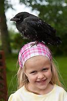Mädchen, Kind mit junger, verwaister Rabenkrähe, Vogel wurde in Wildtier-Auffangstation großgezogen und ist deshalb zahm geworden, Wildtierhilfe Fiel, Krähe, Corvus corone, Aaskrähe, carrion crow