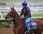 DEL MAR, CA - OCTOBER 31: Sadler's Joy, owned by Woodslane Farm and trained by Thomas Albertrani, exercises in preparation for Longines Breeders' Cup Turf at Del Mar Thoroughbred Club on {mothname} 31, 2017 in Del Mar, California. (Photo by Scott Serio/Eclipse Sportswire/Breeders Cup)