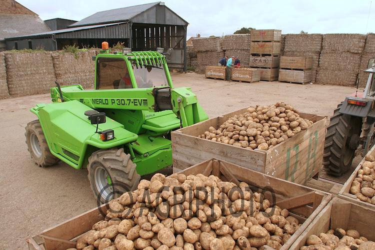 Lifting Potatoes On A Lincolnshire Farm