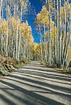 US, CO, Gunnison NF, Autumn Shadows