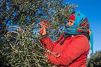 Kanzari Olive Oil