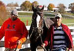 October 29, 2015: Honor Code trained by Claude McGaughey and owned by Lane's End Racing, and Dell Ridge Farm, entered in the Breeder's Cup Classic Grade 1 $5,000,000.  Candice Chavez/ESW/CSM