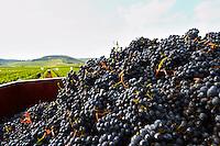 pinot noir beaune cote de beaune burgundy france