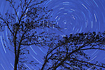 Long exposure winter view of ash tree branches and background star trails.
