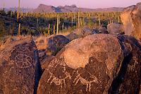 Saguaro cactus and Tucson Mountains<br /> Tucson Mountain Unit<br /> Saguaro National Park<br /> Sonoran Desert,  Arizona