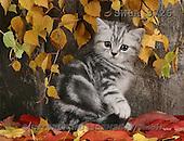 Carl, ANIMALS, photos(SWLA3726,#A#) Katzen, gatos