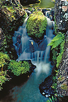 Waterfall, close up with ferns and moss