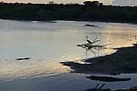 Yala National Park Sri LankaYala National Park Sri Lanka<br /> Grey Heron Great Egret and Crocodile