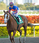 13 February 2010: Munnings and jockey Javier Castellano after the Gulfstream Park Sprint Championship Stakes at Gulfstream Park in Hallandale Beach, FL.