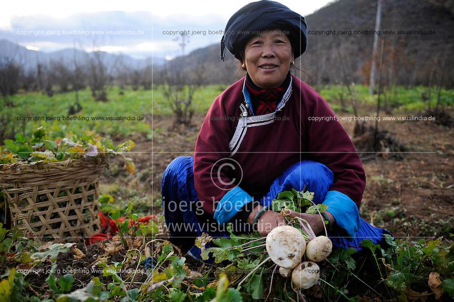 CHINA Yunnan Lugu Lake , ethnic minority Mosuo who are buddhist and women have a matriarch, woman harvest reddish / CHINA Provinz Yunnan , ethnische Minderheit Mosuo am Lugu See , die Mosuo sind Buddhisten und Mosuo Frauen ueben ein Matriarchat aus, Frau erntet Rettich
