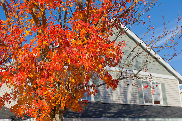 Grey House in Autumn