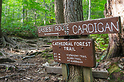 Trail junction of Cathedral Forest Trail and Holt Trail which climbs to the summit of Cardigan Mountain in Orange, New Hampshire USA. Cathedral Forest Trail is considered one of the easiest routes to the summit of Cardigan