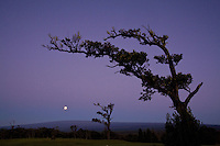 Moon setting over Mauna Loa