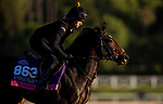 OCT 29: Breeders' Cup Juvenile Fillies Turf entrant Shadn, trained by Andrew M. Balding, gallops at Santa Anita Park in Arcadia, California on Oct 29, 2019. Evers/Eclipse Sportswire/Breeders' Cup